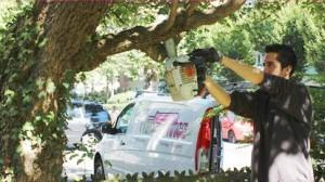 Unser Mitarbeiter sägt einem Baum einen Ast ab.