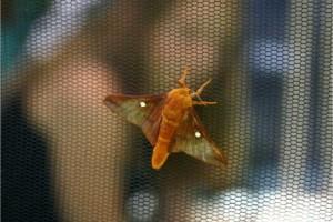 Massgefertigte Insektenschutzgitter und Netze